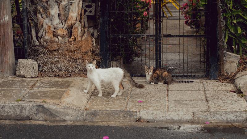 猫 外飼い 違法